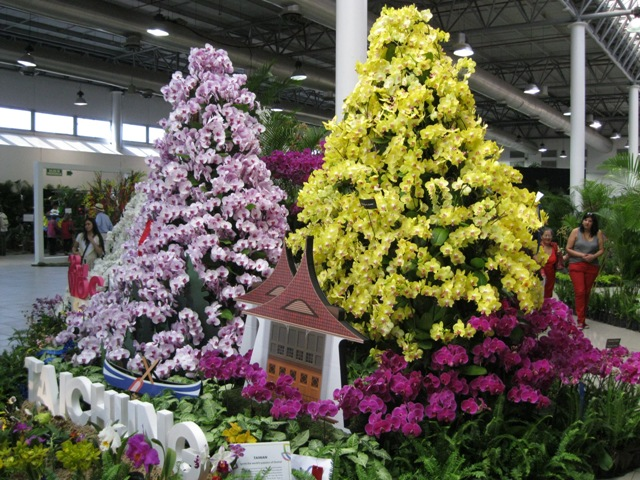 Orchid Christmas Tree.The 22nd World Orchid Conference